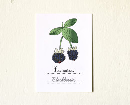 5x7-Fruits-Blackberries