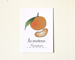 5x7-Fruits-Mandarin