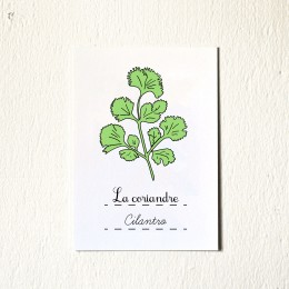 French Fruits Vegetables And Herbs 5 7 Art Prints